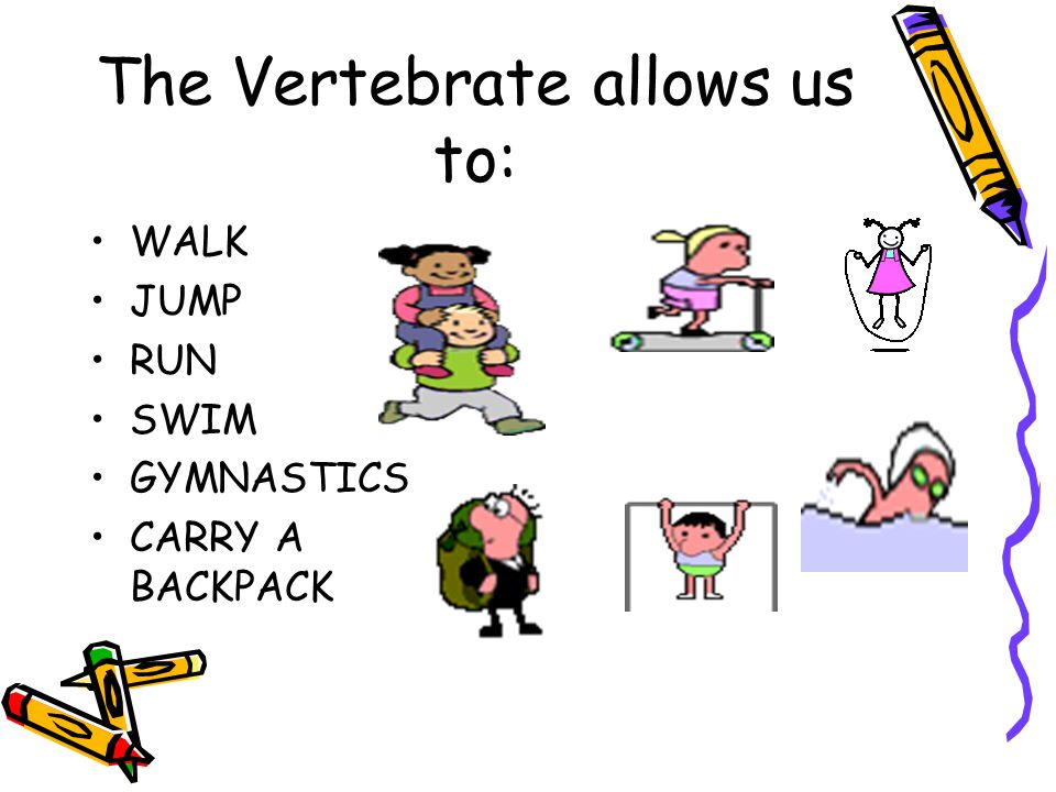 The Vertebrate allows us to: