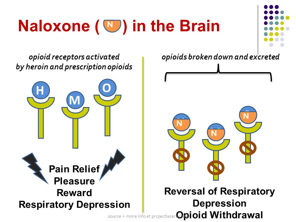 Naloxone ( ) in the Brain