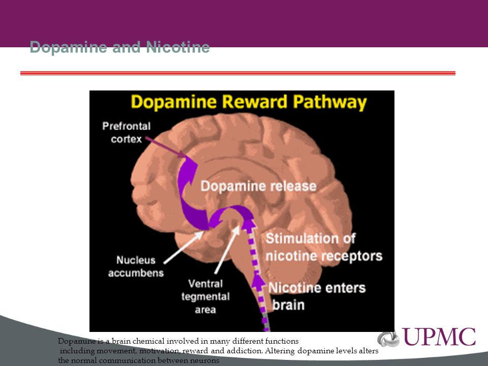 Dopamine and Nicotine Dopamine is a brain chemical involved in many different functions.