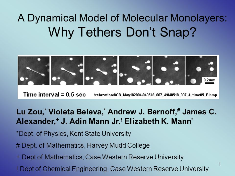 A Dynamical Model of Molecular Monolayers: Why Tethers Don't Snap