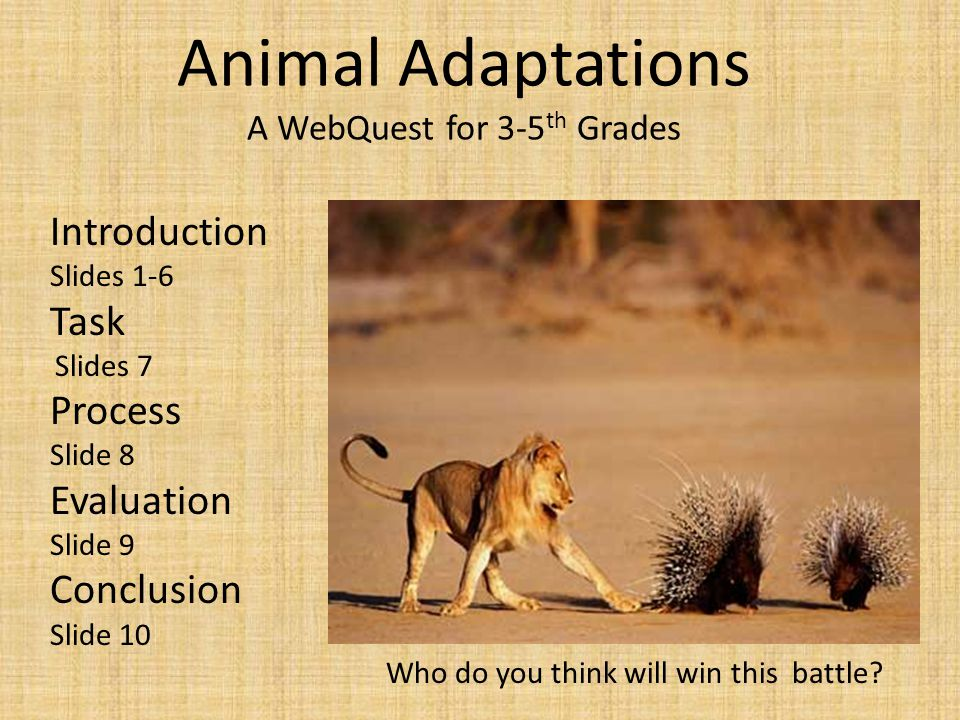 Animal Adaptations A WebQuest for 3-5th Grades