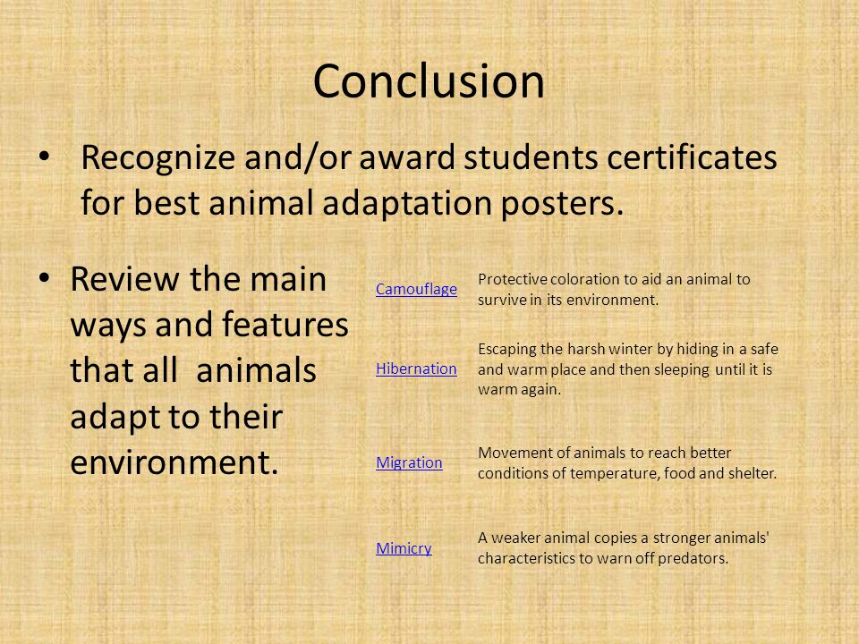 Conclusion Recognize and/or award students certificates for best animal adaptation posters.