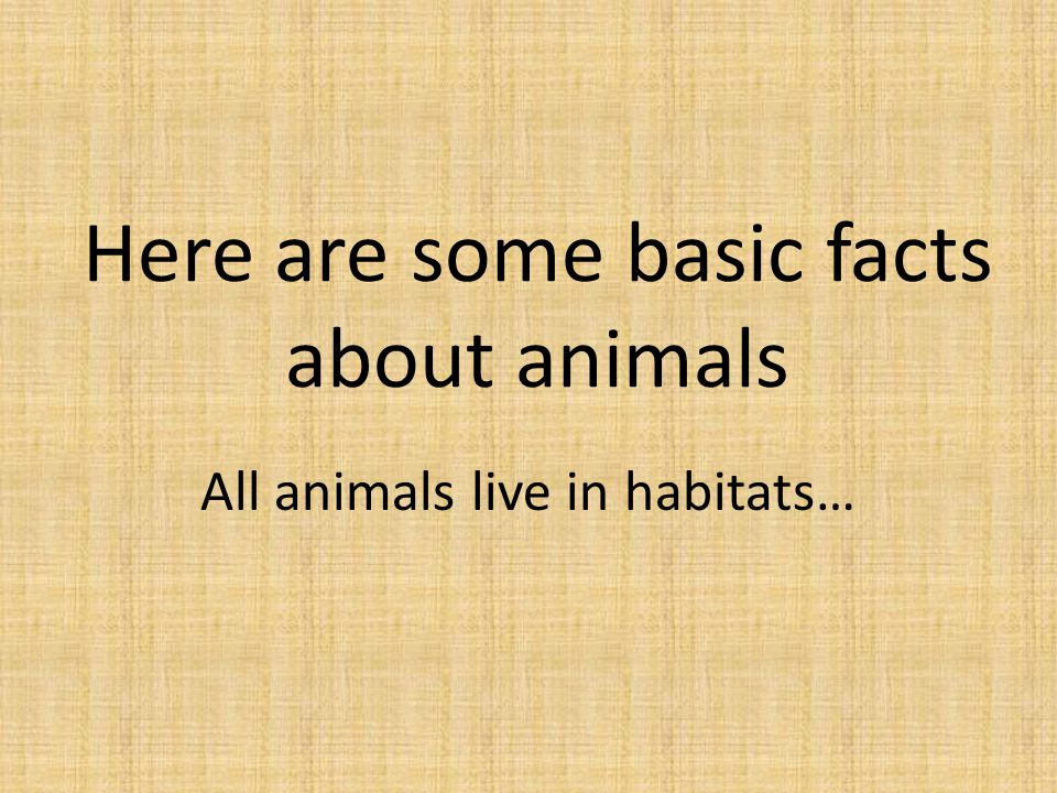 Here are some basic facts about animals