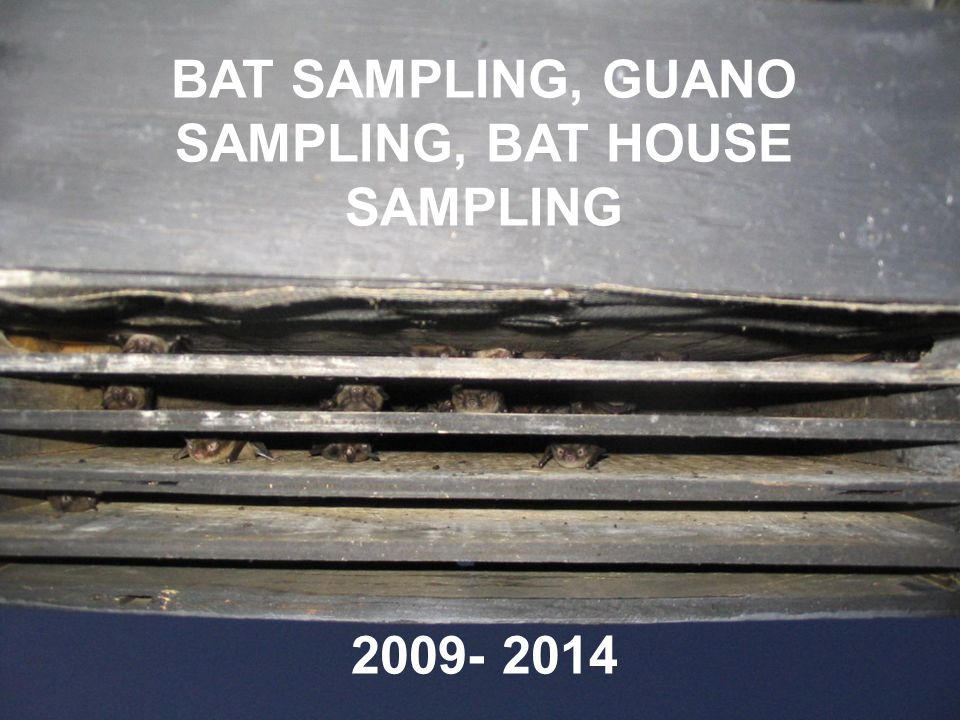 BAT SAMPLING, GUANO SAMPLING, BAT HOUSE SAMPLING