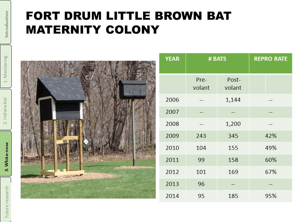 FORT DRUM LITTLE BROWN BAT MATERNITY COLONY