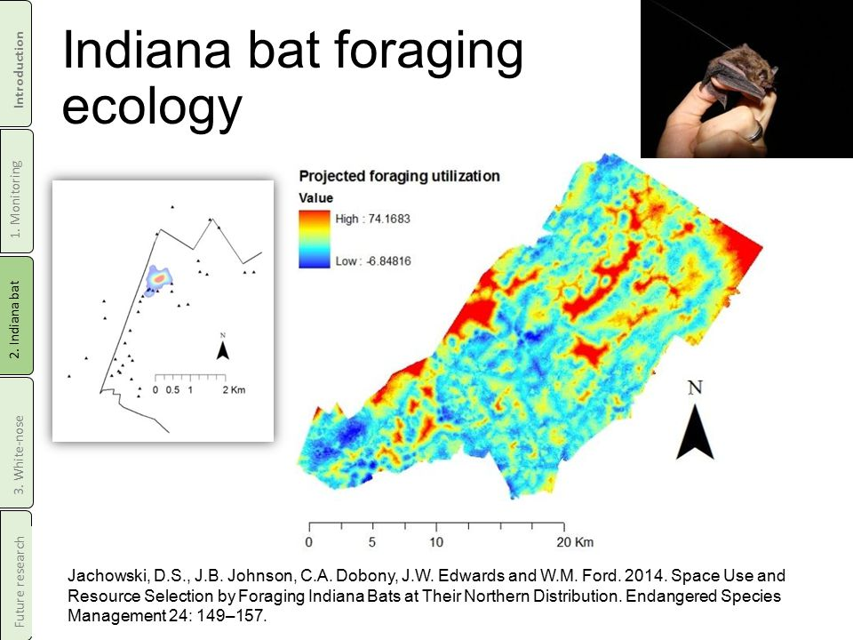 Indiana bat foraging ecology