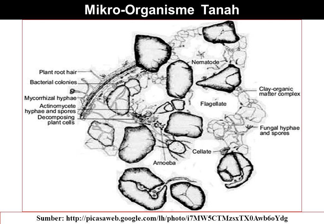 Mikro-Organisme Tanah