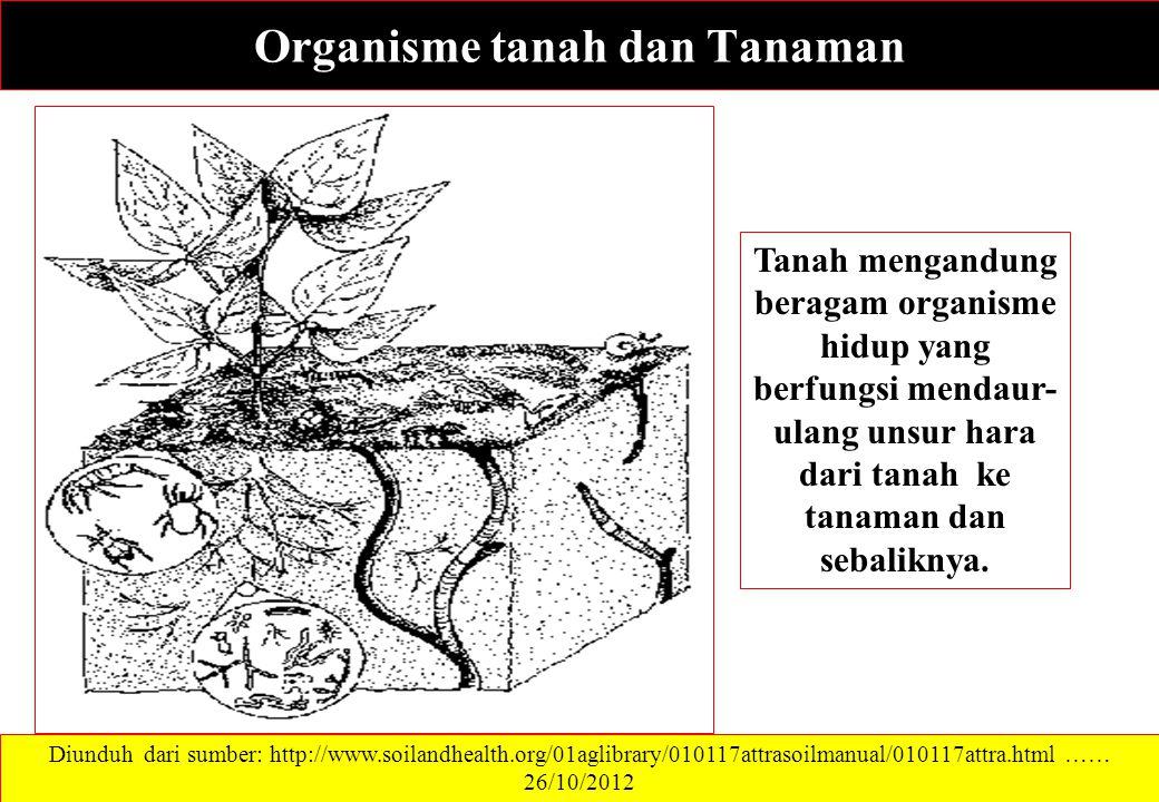 Organisme tanah dan Tanaman