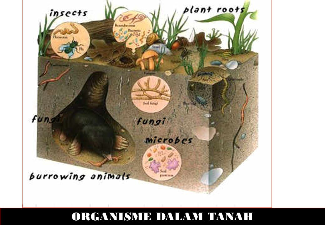 ORGANISME DALAM TANAH