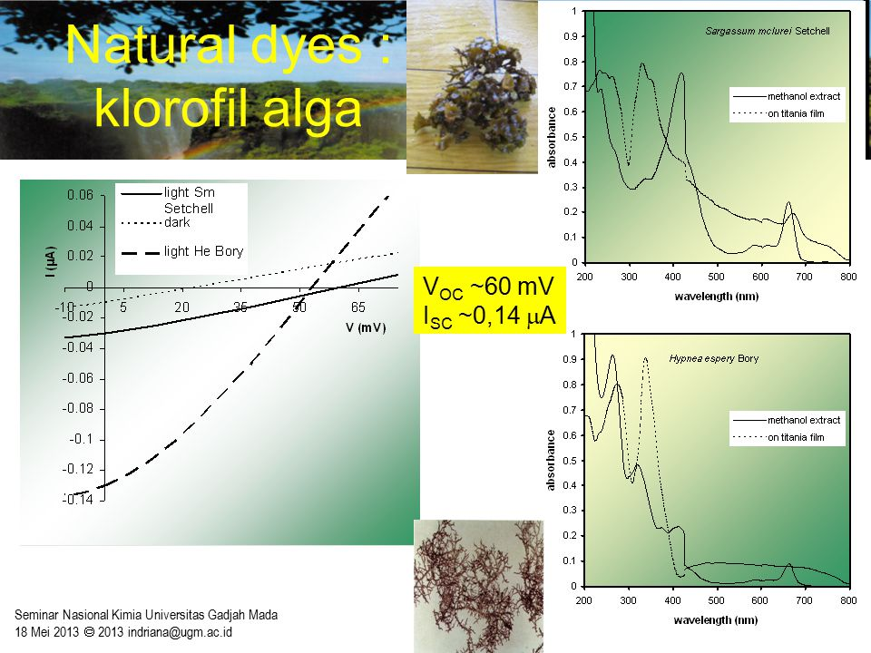Natural dyes : klorofil alga