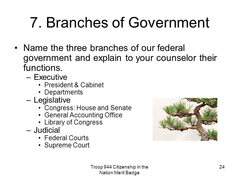 7. Branches of Government