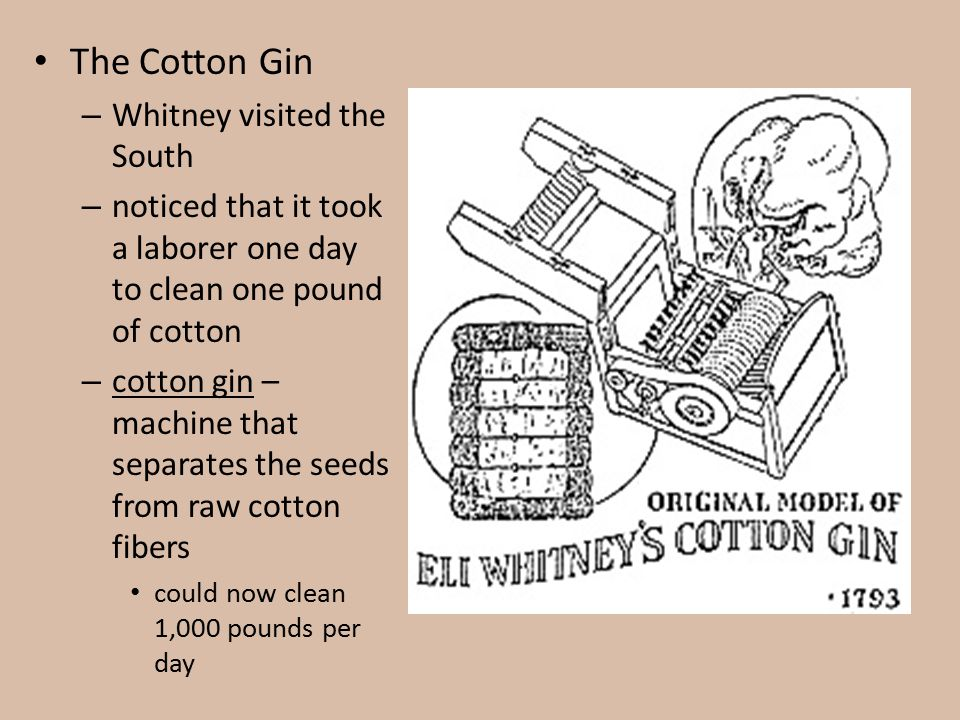 The Cotton Gin Whitney visited the South