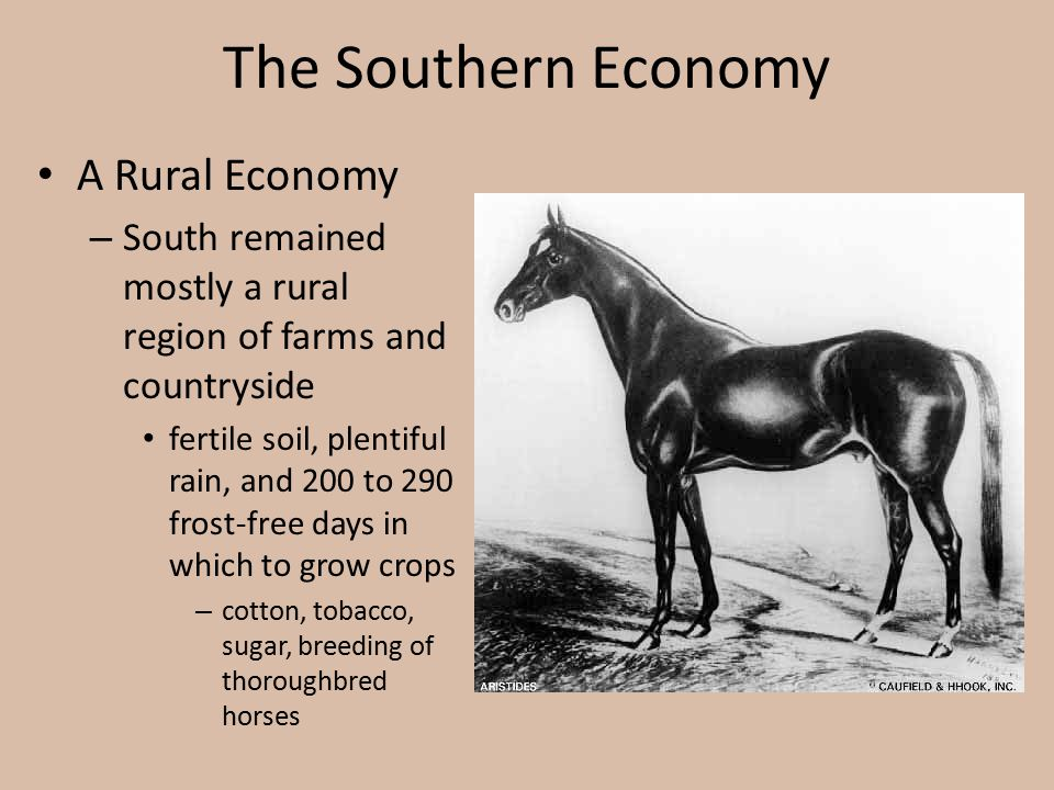 The Southern Economy A Rural Economy