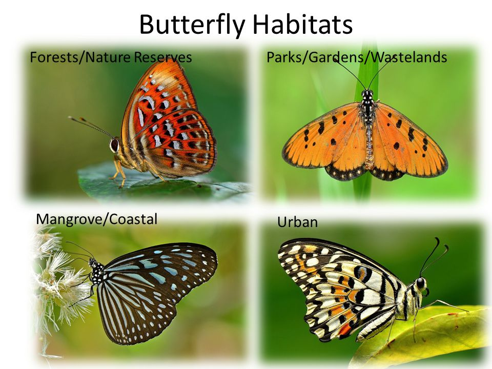 Butterfly Habitats Forests/Nature Reserves Parks/Gardens/Wastelands
