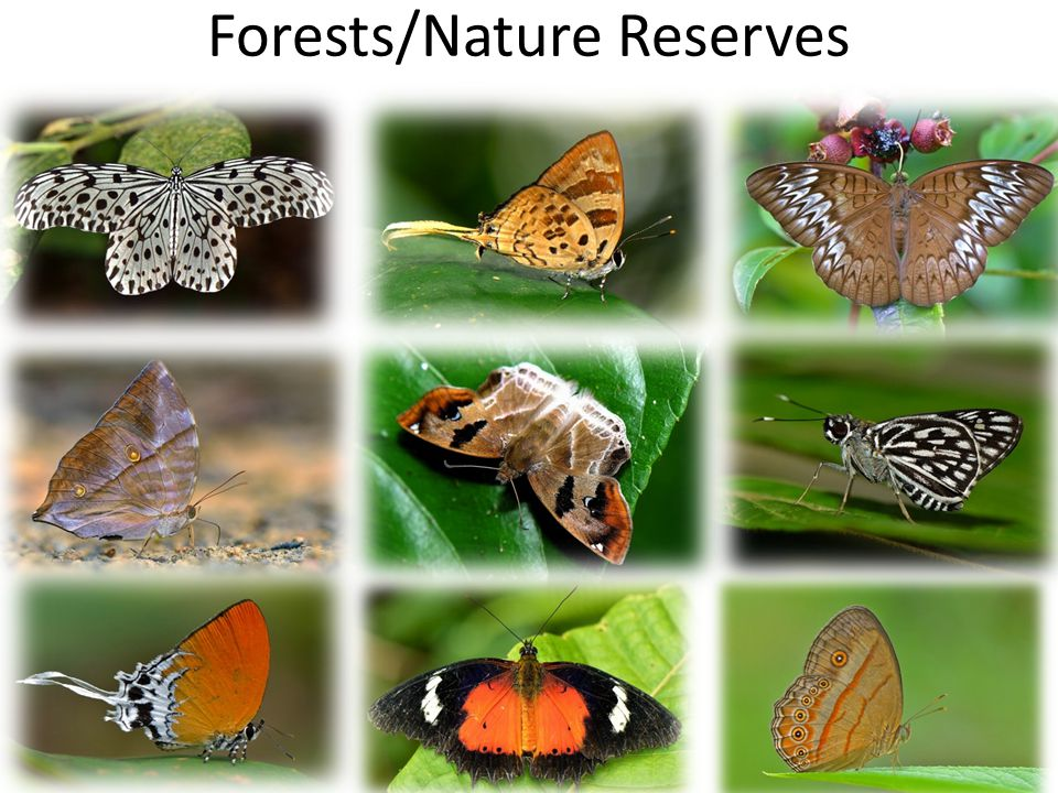 Forests/Nature Reserves