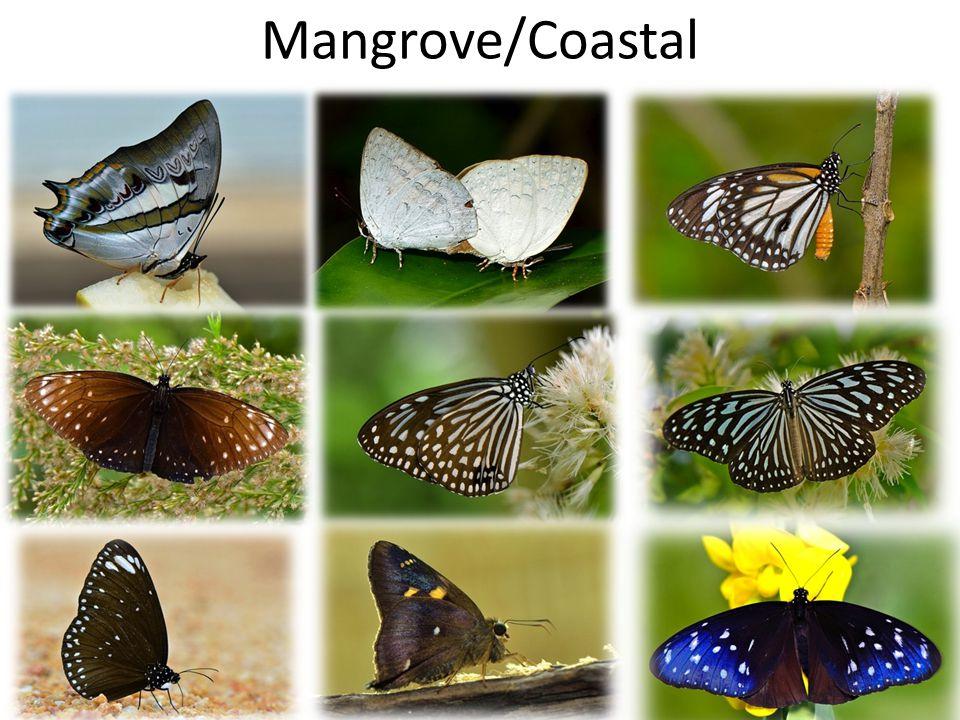 Mangrove/Coastal