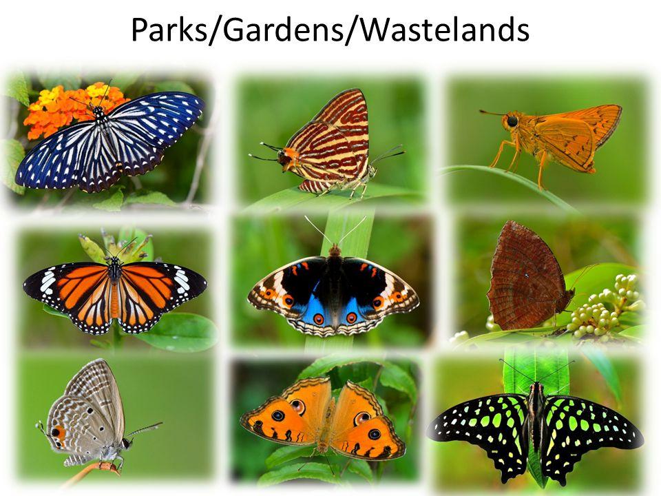 Parks/Gardens/Wastelands