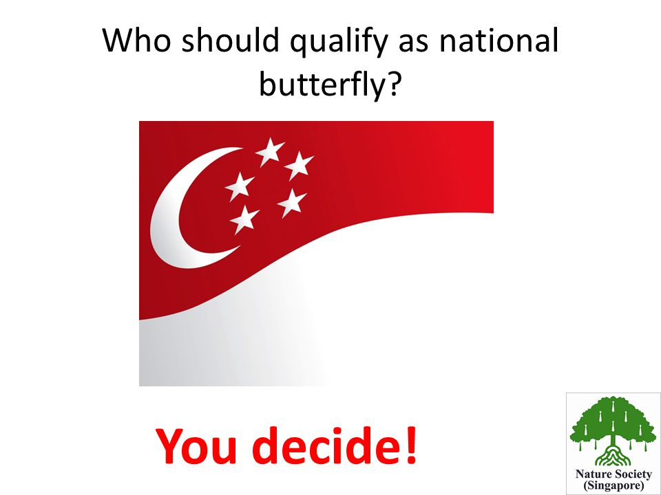 Who should qualify as national butterfly