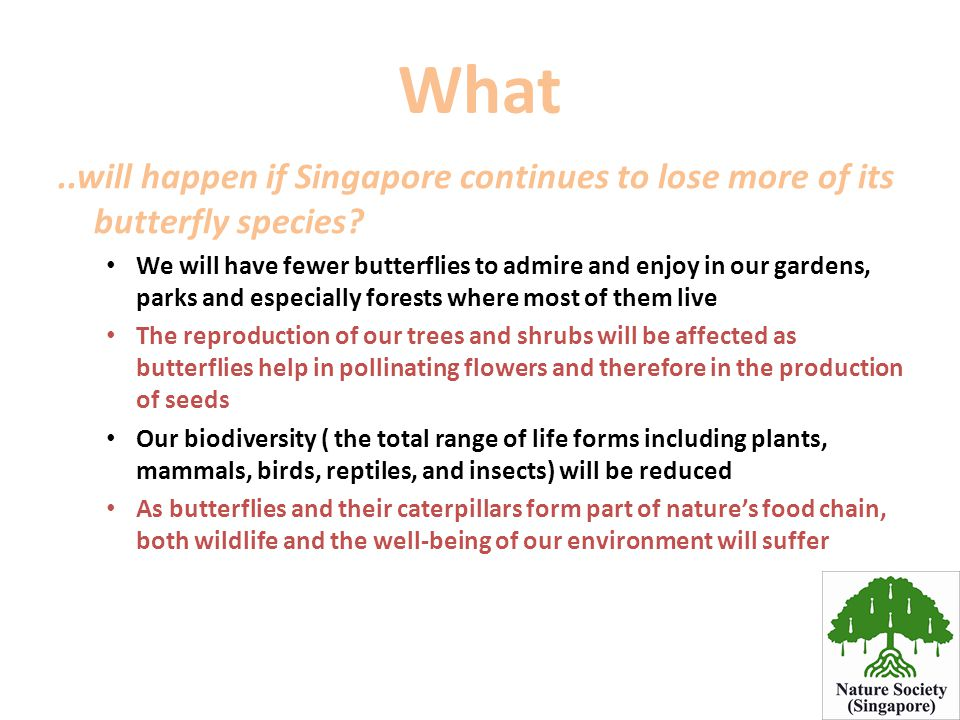 What ..will happen if Singapore continues to lose more of its butterfly species