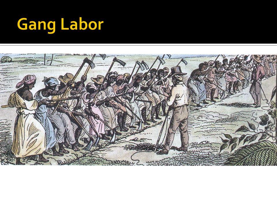 Gang Labor