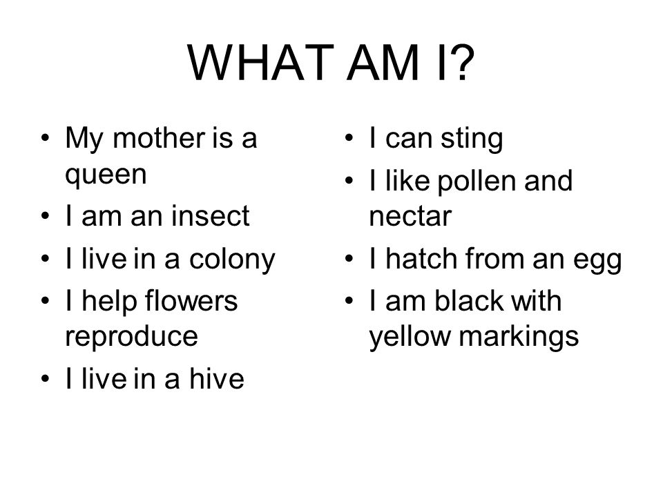 WHAT AM I My mother is a queen I am an insect I live in a colony