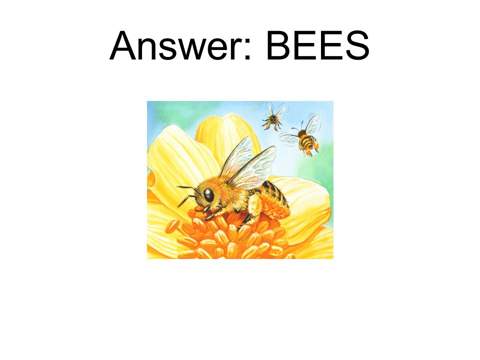 Answer: BEES