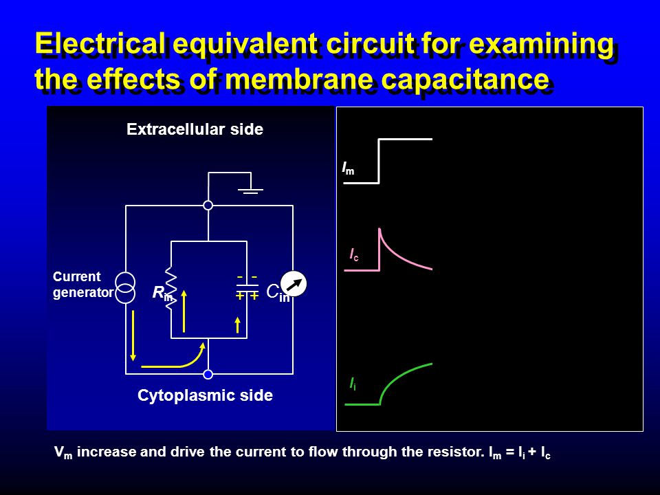 Electrical equivalent circuit for examining the effects of membrane capacitance