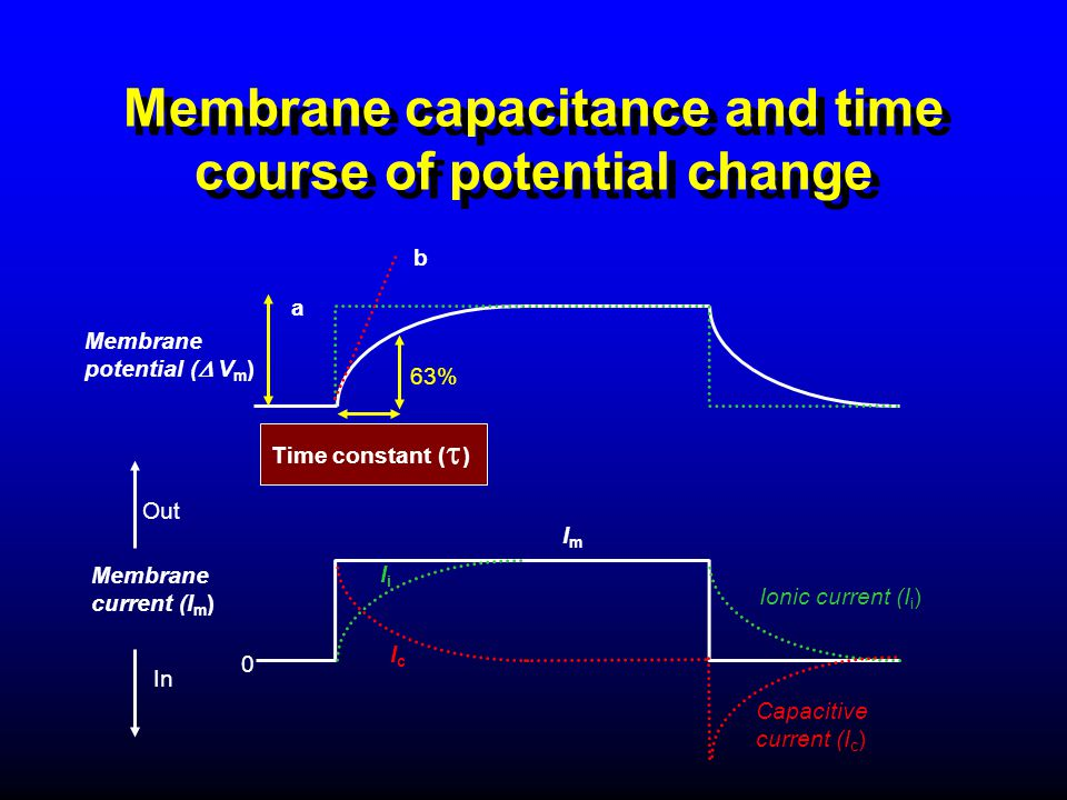 Membrane capacitance and time course of potential change