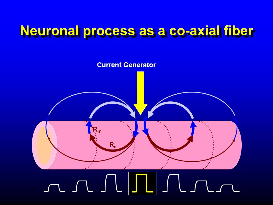 Neuronal process as a co-axial fiber