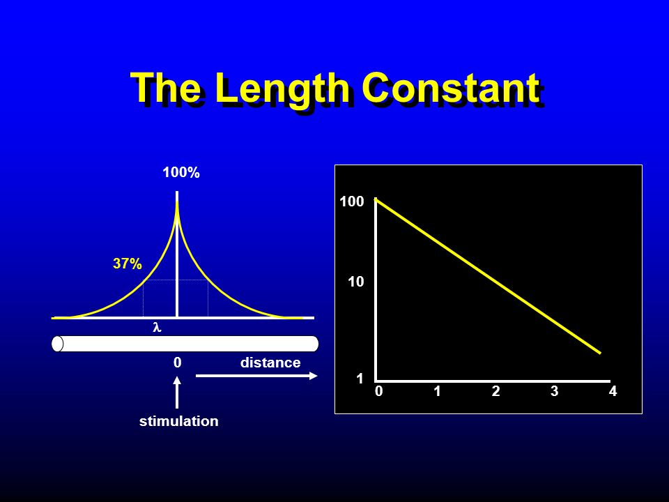 The Length Constant 100% 100 10 37% 1 l 0 distance 0 1 2 3 4