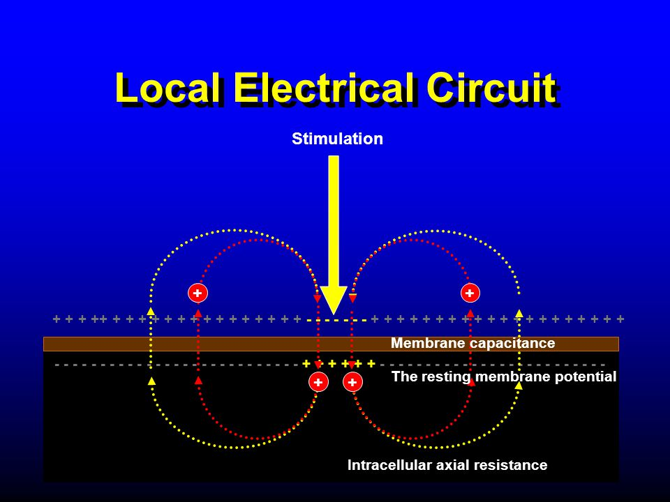 Local Electrical Circuit