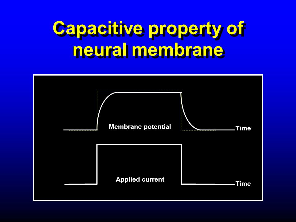 Capacitive property of neural membrane