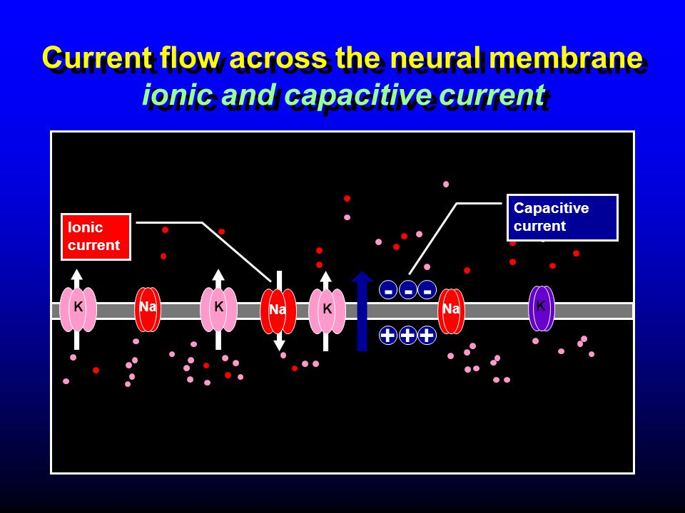 Current flow across the neural membrane ionic and capacitive current