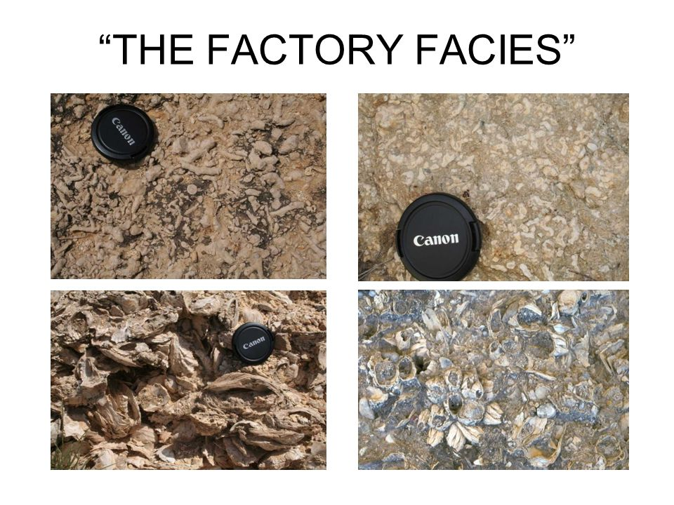THE FACTORY FACIES