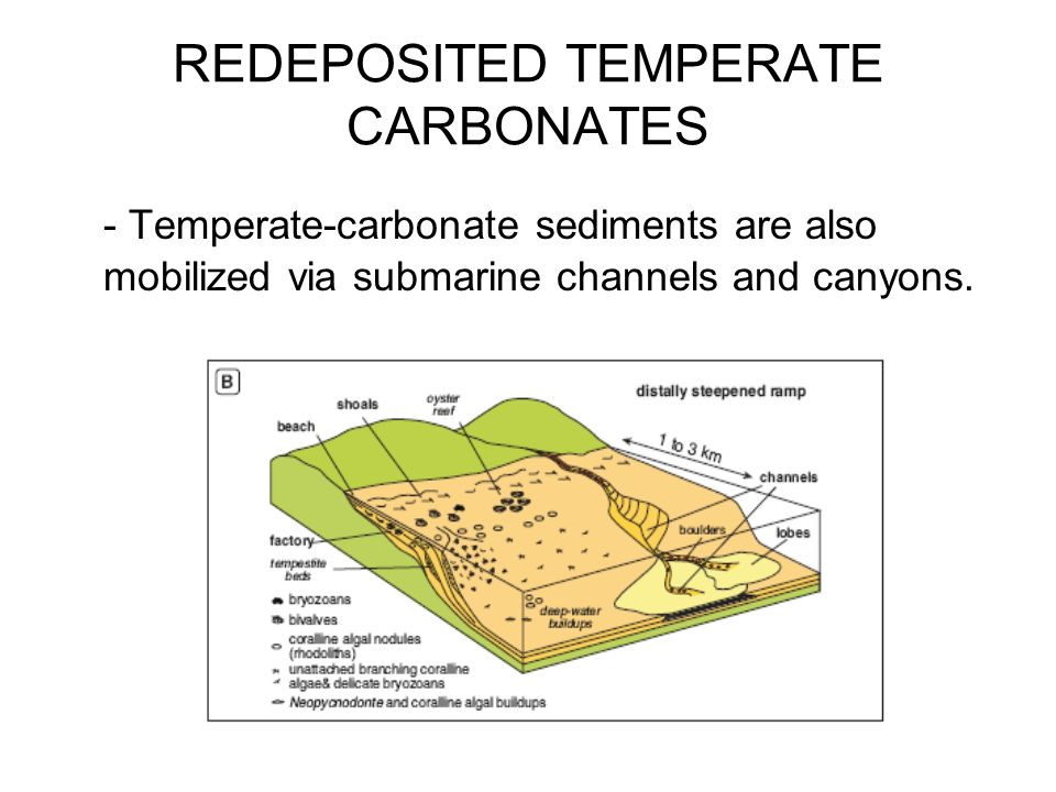 REDEPOSITED TEMPERATE CARBONATES