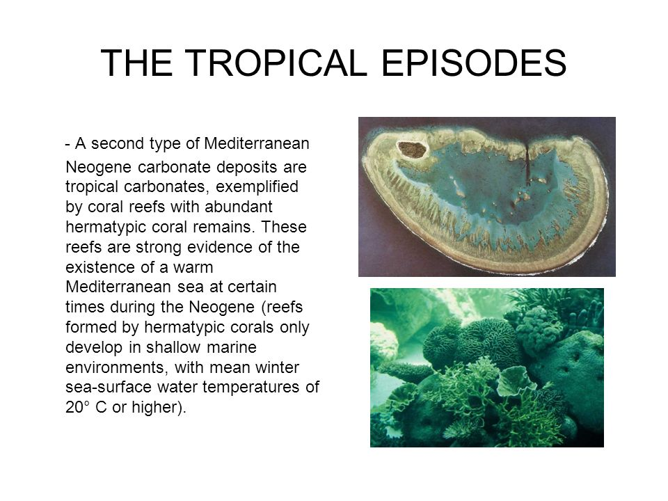 THE TROPICAL EPISODES
