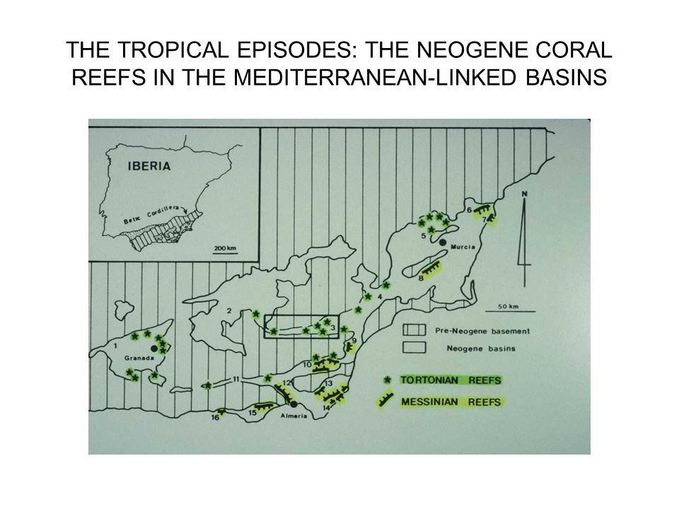 THE TROPICAL EPISODES: THE NEOGENE CORAL REEFS IN THE MEDITERRANEAN-LINKED BASINS