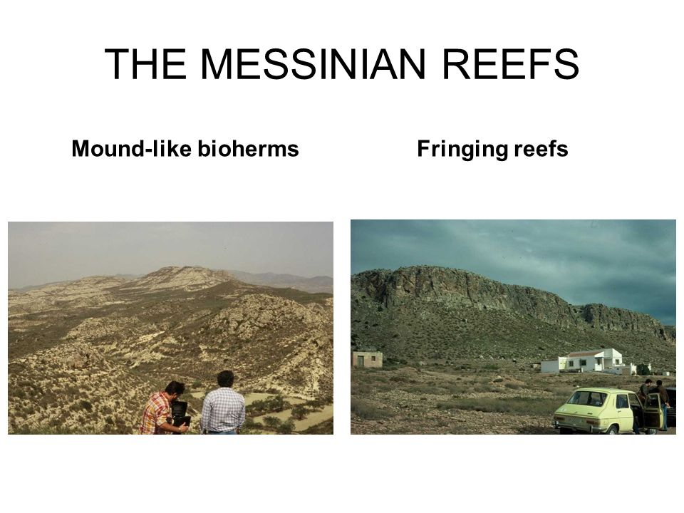 THE MESSINIAN REEFS Fringing reefs Mound-like bioherms