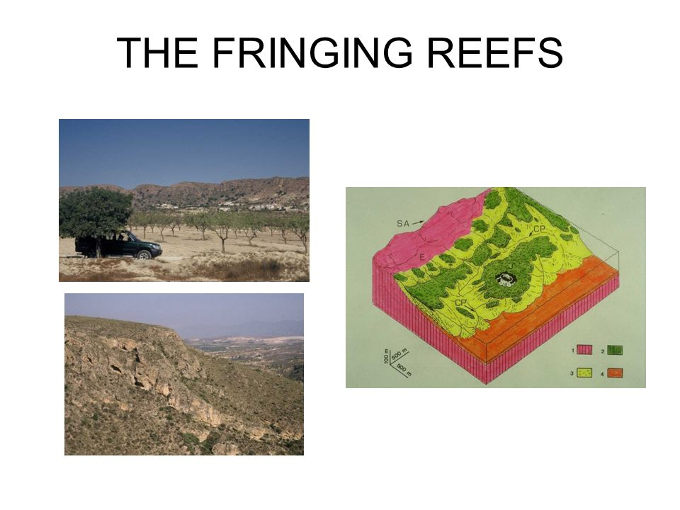 THE FRINGING REEFS