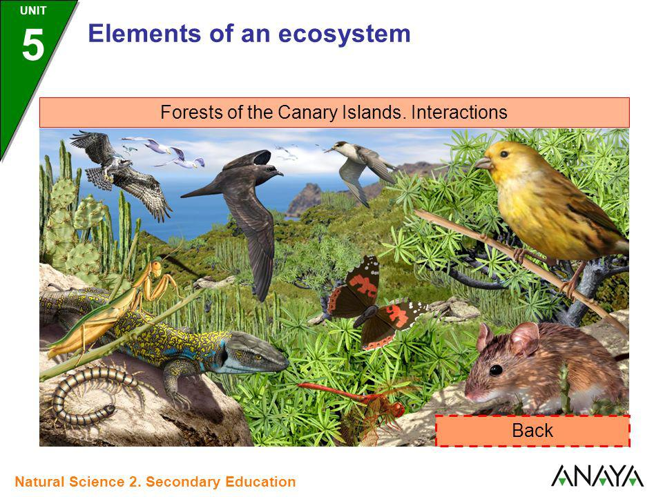 Forests of the Canary Islands. Interactions