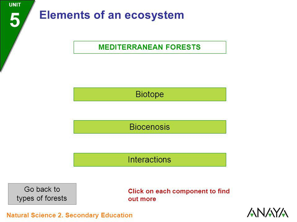MEDITERRANEAN FORESTS