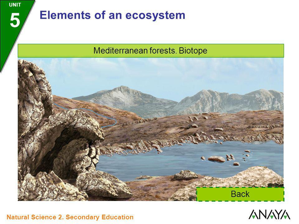 Mediterranean forests. Biotope
