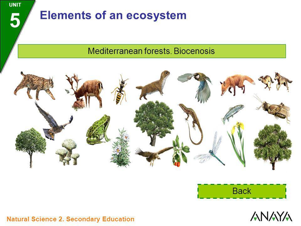 Mediterranean forests. Biocenosis