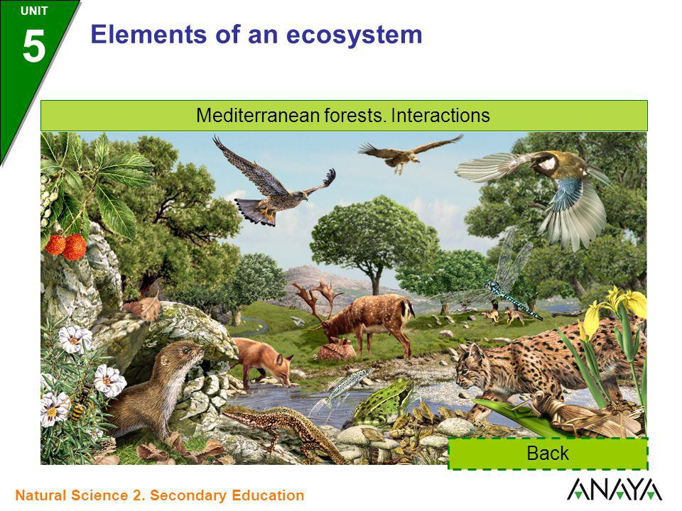 Mediterranean forests. Interactions