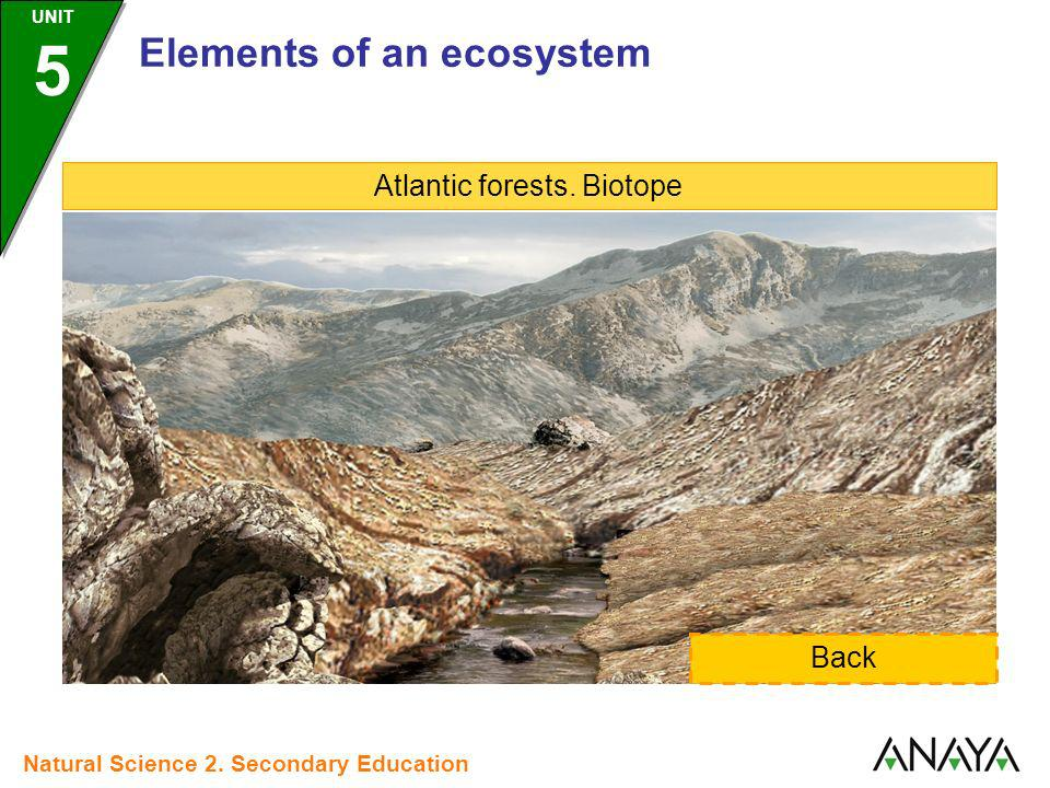 Atlantic forests. Biotope