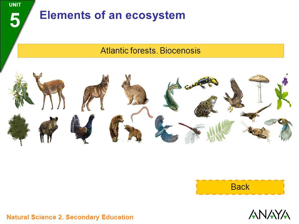 Atlantic forests. Biocenosis