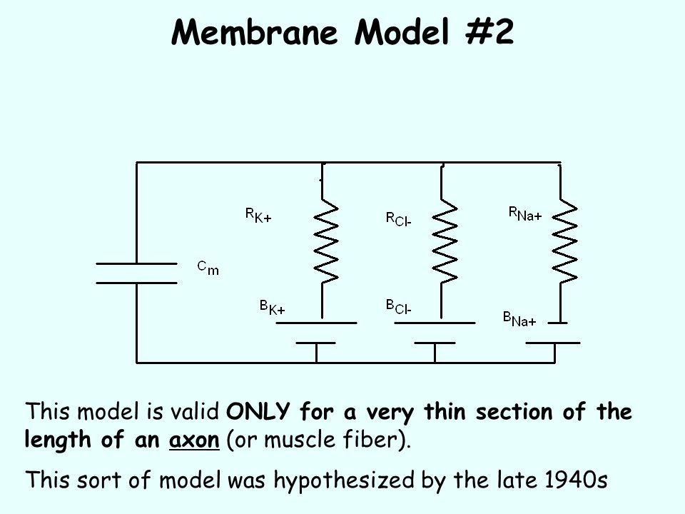 Membrane Model #2 This model is valid ONLY for a very thin section of the length of an axon (or muscle fiber).