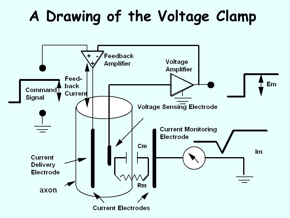 A Drawing of the Voltage Clamp