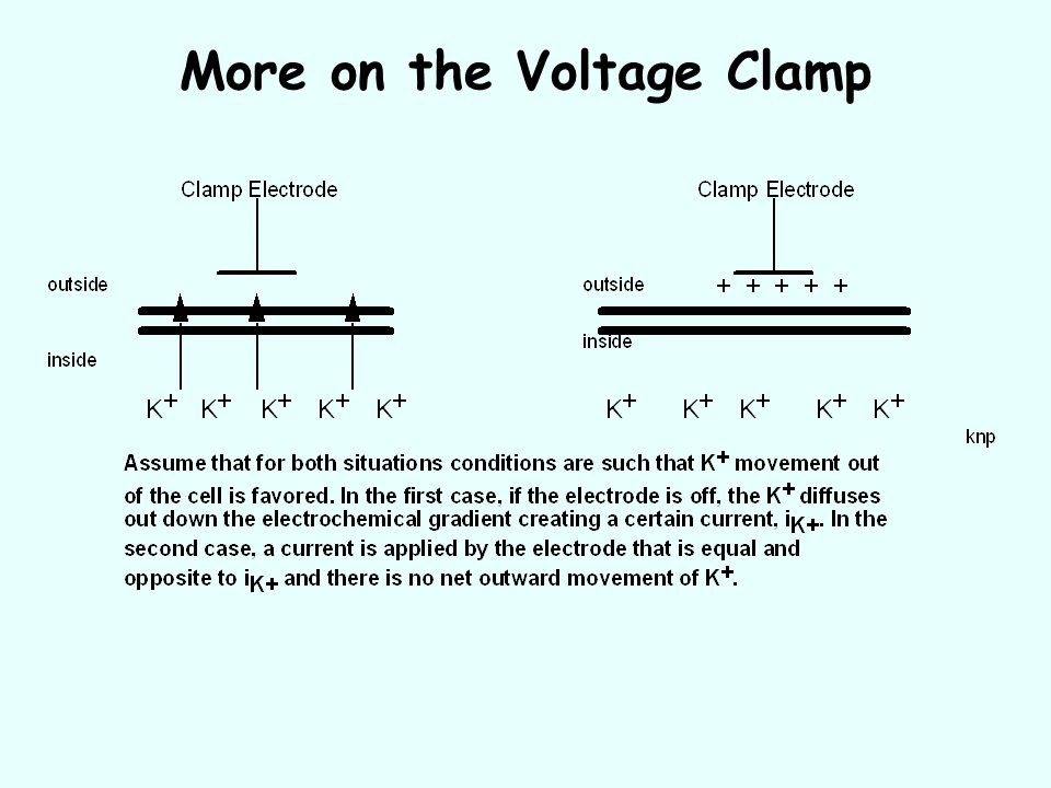 More on the Voltage Clamp
