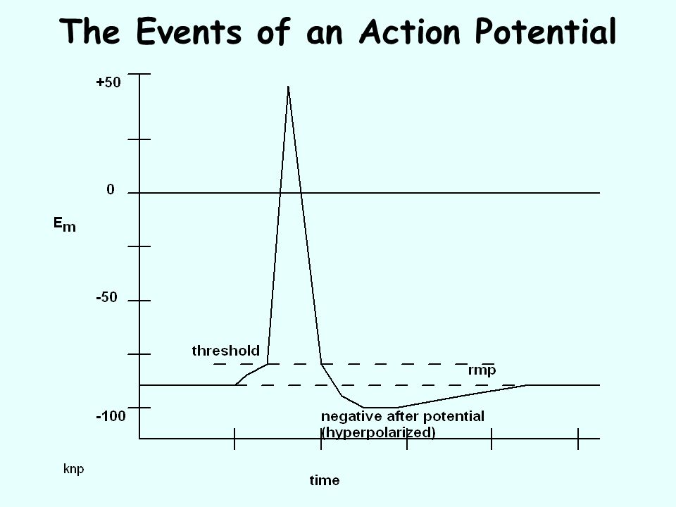 The Events of an Action Potential